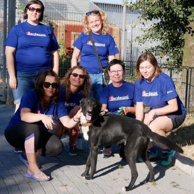 Wolontariusze z psami